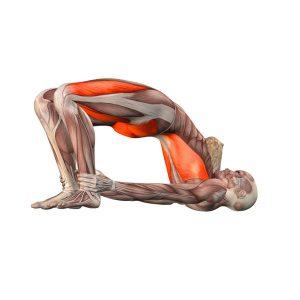 tư thế cây cầu Yoga
